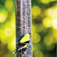 Create your own bird sanctuary