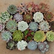 Secrets to succulents