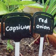 Innovative green ideas (Part 2)