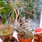 Create a Simple Houseplant Wicking System